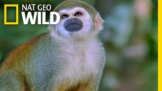 Avoiding Surprise Encounters | Amazonia