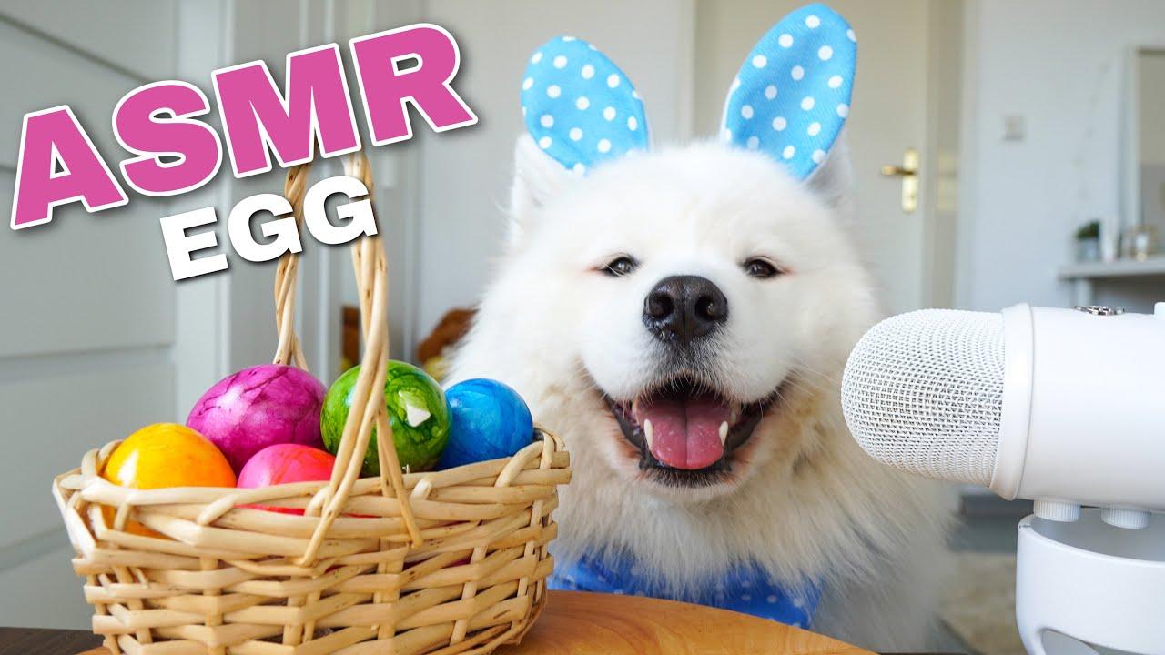 ASMR Dog Eating Boiled Egg I MAYASMR