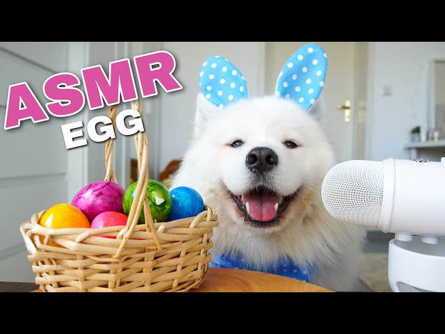 ASMR Dog Eating Boiled Egg I MAYASMR