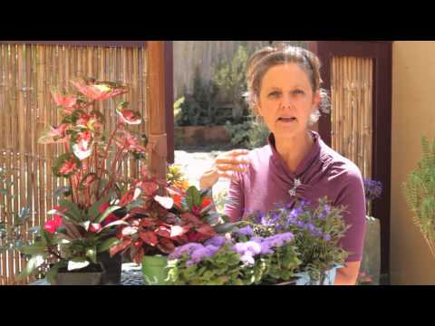 How to Make a Nice, Colorful Flower Garden : Beautiful Gardens & Plant Care