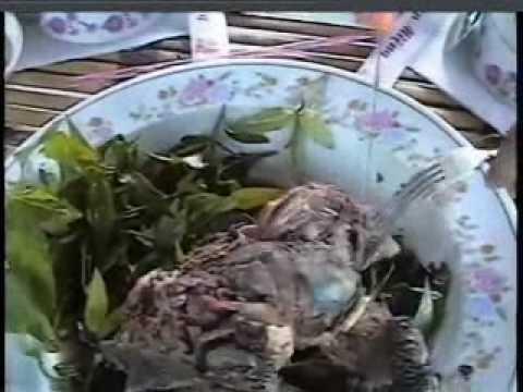 ăn rùa nhoam nhoam