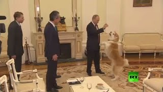 كلبة الرئيس اليابانية أخافت صحافيي مسقط رأسها!