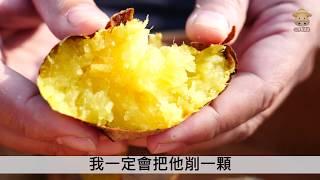 水林台農57號夢想黃金地瓜,最好吃的番薯品種