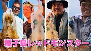 【ティップラン】種子島レッドを狙え〜3.73㎏〜