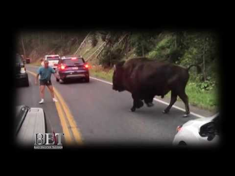 A man taunts & confront a huge Bison in Yellowstone Park - What happens next