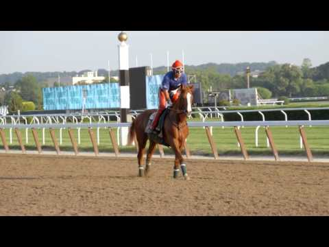 A tribute to California Chrome {The Call} Happy Retirement