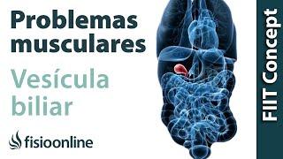Causar muscular? la dolor de biliar problemas vesícula los ¿Pueden