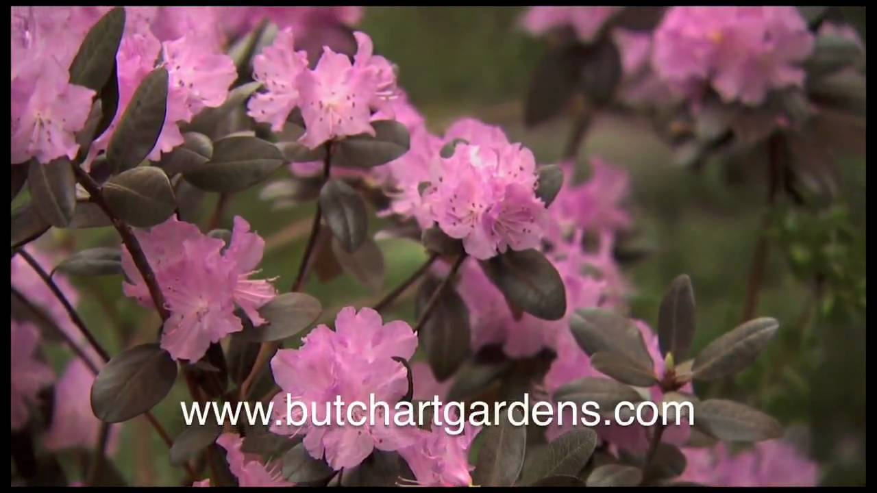 The 5 Seasons at The Butchart Gardens