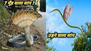 कभी देखा है ऐसे सांपो को? (जरूर देखिये) | The truth of the most weird and unique snakes |