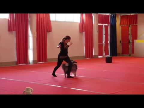 Concours dog dancing Troyes 2017 Cheyenne