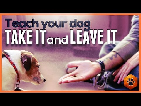 Teach your dog Leave It and Take It - Safe and soft mouth