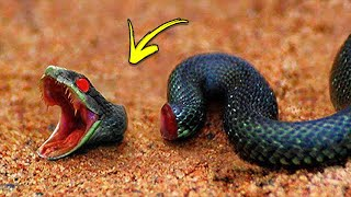 The Most UNUSUAL Animals That Can Live After Death