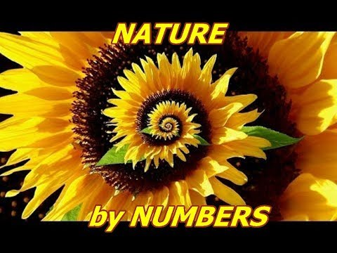 Nature by Numbers (Fibonacci Sequence & The Golden Ratio)