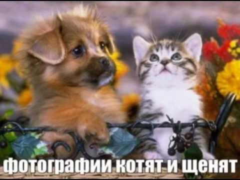 Фото и картинки собак и щенков
