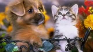 Фотографии милых котят и щенят
