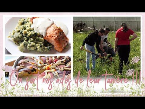 vlog-famille-de-18-août-:-saumon-au-four-miel-moutarde-et-citron,-gâteau-amande-pêche
