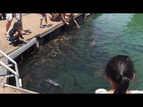 Las Vegas Boat Harbor Lake Mead NV