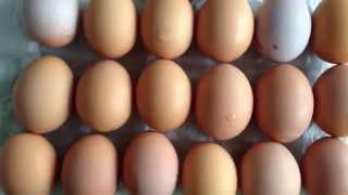 Записки прівереди: яйця, курка і бя-реньє від ѕеаѕопмаркет. Частина 2  bio food review