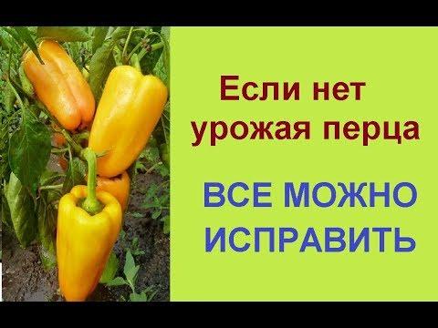 Вопрос: Чем нужно обязательно подкормить перец во время его цветения?