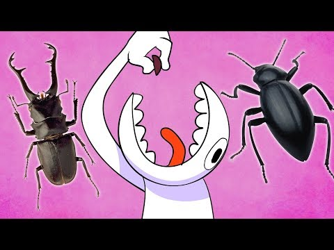 Can Humans Survive Eating Nothing But INSECTS? | Dolan Life Mysteries
