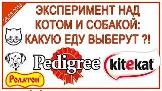 Эксперимент над собакой и котом по выбору пищи | Pedigree | Kitekat | Роллтон