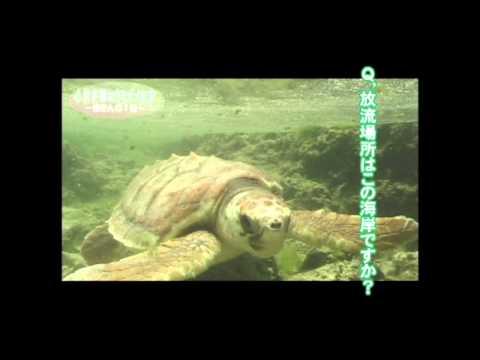 NO5 「ウミガメを守る」 小林夫婦の記録