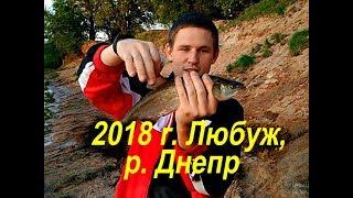 Любуж 2018, р. Днепр. Голавль на майского жука // Рыбалка в Могилёвской области, рыбалка в Могилёве