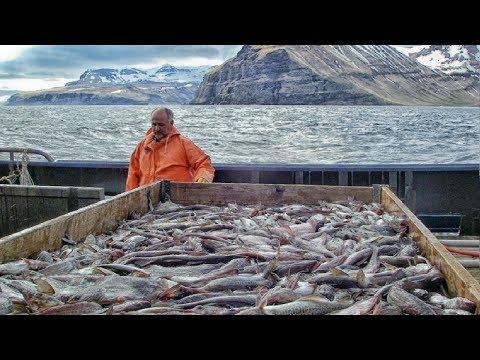 Sole Fish Trawl Fishing - Coldwater Vessel Fishing - Modern Fishing Aquaculture