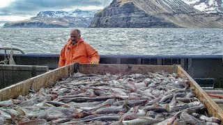 Beautiful Sole Fish Trawl Harvesting Vessel - Modern Fishing Aquaculture