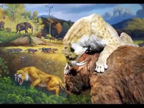 Ice Age Encounters - La Brea Tar Pits Museum - Sabre-Toothed Cat
