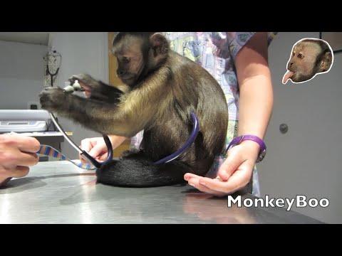 Monkey Vet Visit