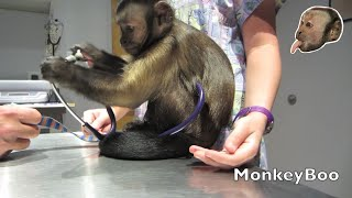 Monkey Vet Visit!