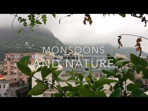The Monsoons & Nature 2016 | India | AP | Vijayawada