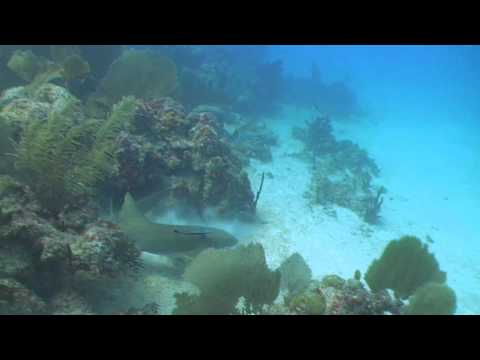 Youtube Anguilla Scuba Dive