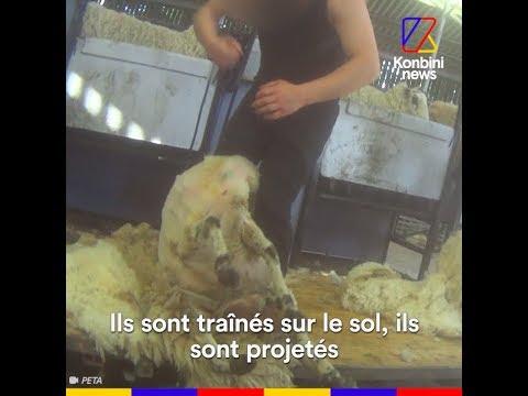 L'enfer de l'industrie lainière en Grande-Bretagne