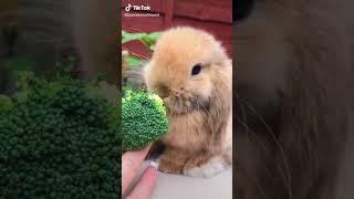브로콜리 먹방