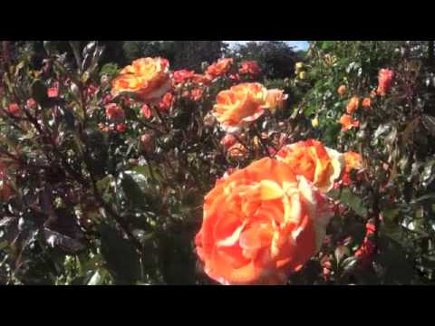 Worlds Most Beautiful Rose Gardens Garden No 3 The