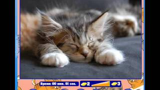 """ОТВЕТЫ Игра """"Найди кота"""" Одноклассники 41, 42, 43, 44, 45, 46, 47, 48, 49, 50 уровень."""