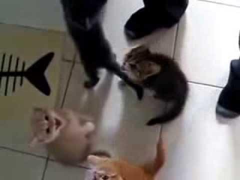 Mèo con yêu quý đói quá kêu inh ỏi đòi ăn