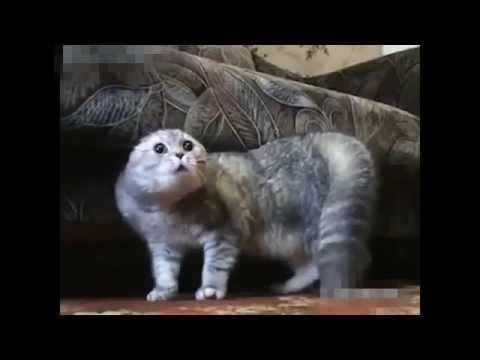 Видео про кошек - смешные видео приколы про котов