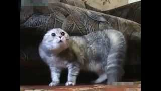 Приколы с котами  2015 ГОВОРЯЩИЕ КОТЫ