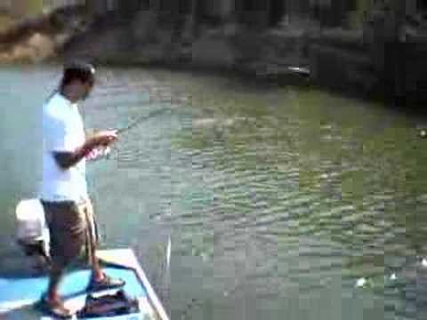 Download Castaic Bass Fishing (SoCal)