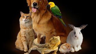 Поющие собаки на ютубе!Смотреть онлайн!