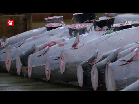 Giant tuna fetches more than $600,000 USD at Tokyo auction