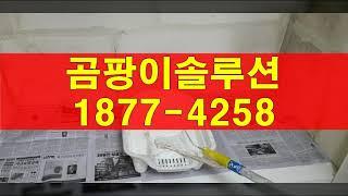 군포 금정동 곰팡이제거, 의왕 단열 벽지 도배시공(산본…