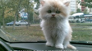 Смешные картинки про кошек и котят Выпуск №63  FUNNY CATS СМЕШНЫЕ КОШКИ