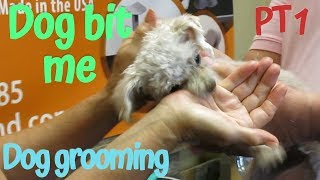 Matted Maltipoo Bit the Groomer Part 1