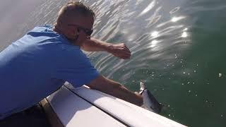 Chesapeake Bay Shark!