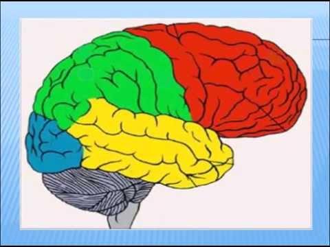 Диагностика амбидекстрии Пугач ВН Тест на определение