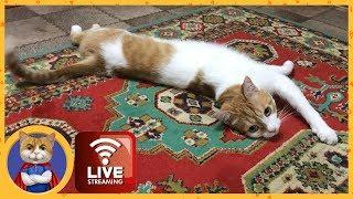 Котик Рыжик в прямом эфире
